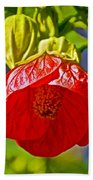 Red Flower At Pilgrim Place  In Claremont-california Beach Towel