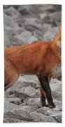 Red Fox Beach Towel