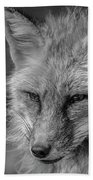 Red Fox In Black And White Beach Towel