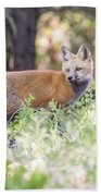 Red Fox Kit Looking For Mom Beach Towel