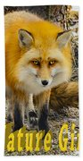 Red Fox Nature Girl Beach Towel