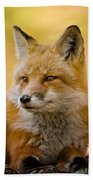 Red Fox Pictures 131 Beach Towel