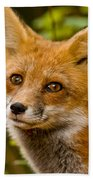 Red Fox Pictures 155 Beach Towel