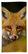 Red Fox Pictures 157 Beach Towel