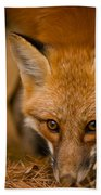 Red Fox Pictures 162 Beach Towel