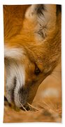 Red Fox Pictures 164 Beach Towel