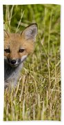 Red Fox Pictures 19 Beach Towel