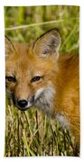 Red Fox Pictures 34 Beach Towel
