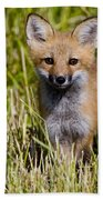 Red Fox Pictures 7 Beach Towel
