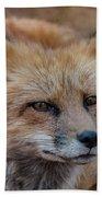 Red Fox Portrait 2 Beach Towel