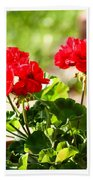 Red Geraniums Triptych Beach Towel