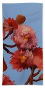 Red Gum Blossoms Australian Flowers Oil Painting Beach Towel