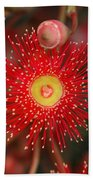 Red Gum Flower Macro Beach Towel