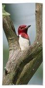 Red-headed Woodpecker Beach Towel