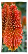 Red-hot Poker Flower Kniphofia Beach Towel