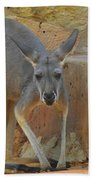 Red Kangaroo Beach Towel