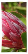 Red King Protea Bud Beach Sheet