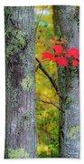 Red Leaves Beach Towel by Gary Lengyel