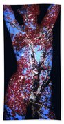 Red Maple Beach Towel by Arla Patch