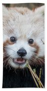 Red Panda Wonder Beach Towel