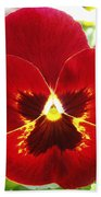 Red Pansy Beach Towel