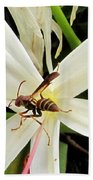 Red Paper Wasp And Spider Lily 000 Beach Sheet