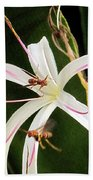 Red Paper Wasps And Spider Lily Beach Towel
