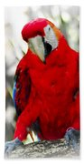 Red Parrot Beach Towel