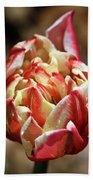 Red Peony Tulip Beach Sheet
