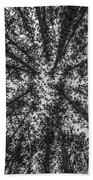 Red Pine Tree Tops In Black And White Beach Towel