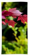Red Red Maple Leaves Beach Towel
