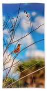Red Red Robin Beach Towel