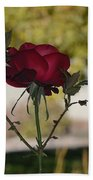 Red Rose 1 Beach Towel