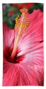 Red Rose Of Sharon  Beach Towel