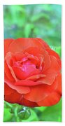 Red Rose On Natural Background With Green Leaves. Beach Towel