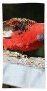 Red Rosella Beach Towel