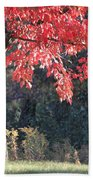 Red Shade Tree Beach Towel