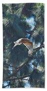 Red Shouldered Hawk Flying Away 1 Beach Towel
