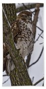 Red Shouldered Hawk - Madison - Wisconsin Beach Towel