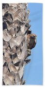 Red Shouldered Hawk On Palm Tree Beach Towel