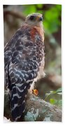 Red-shouldered Hawk Beach Towel