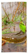 Red Spotted Newt Beach Towel