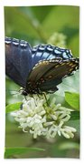 Red-spotted Purple Butterfly On Privet Flowers Beach Towel