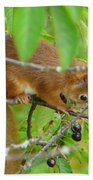 Red Squirrel In The Cherry Tree Beach Towel