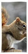 Red Squirrel On Wooden Fence II Beach Towel