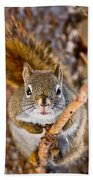 Red Squirrel Pictures 144 Beach Towel