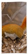 Red Squirrel Pictures 145 Beach Towel