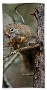 Red Squirrel Pictures 161 Beach Towel