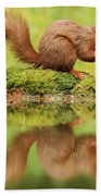 Red Squirrel Reflection Beach Towel
