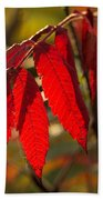 Red Sumac Leaves Beach Towel